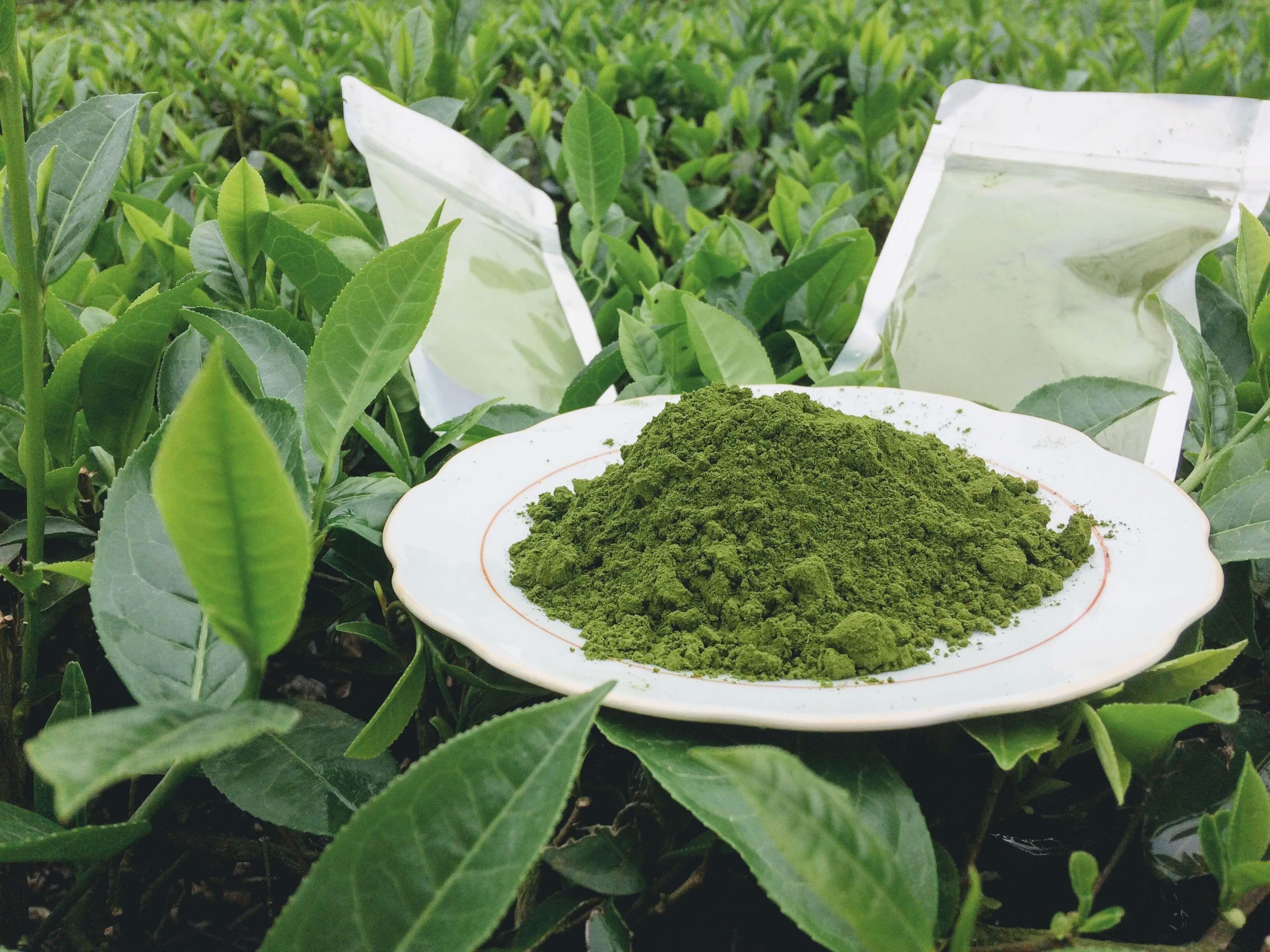 Bột trà xanh Thái Nguyên đã nghiền mịn